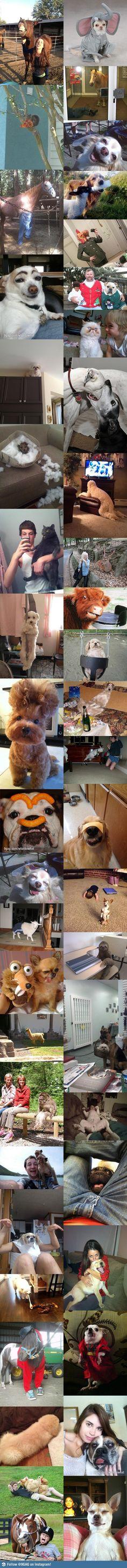 Most WTF animal pics of 2012