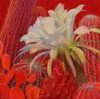 Desert Lady,flower,red,prickly pear