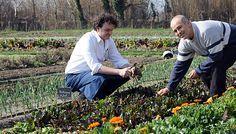 biokert - mit mi mellé? Garden Plants, Good To Know, Green, Outdoor, Gardening, Decor, Patio, Balcony, Outdoors