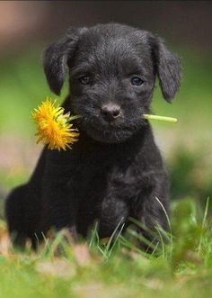 Puppy and the Dandelion