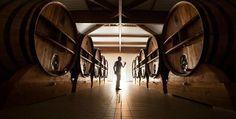 Visite Collard-Picard à Villers-sous-Châtillon - champagne de garde sans fermentation malolactic