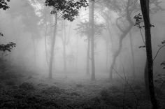 A forest in Sintra - A beautiful foggy forest in Sintra.