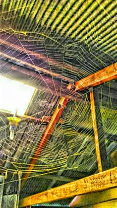 Spider nets #hdrphotograpy #jumpot #anggrekungu