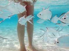 This is how friendly Maldives fish are to people - www.myMaldives.travel