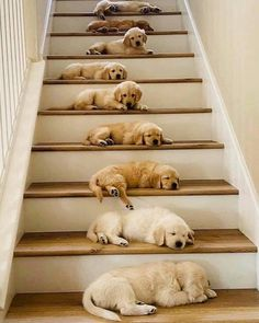 Super Cute Puppies, Baby Animals Super Cute, Cute Wild Animals, Baby Animals Pictures, Cute Baby Dogs, Cute Little Puppies, Cute Funny Dogs, Cute Dogs And Puppies, Cute Little Animals