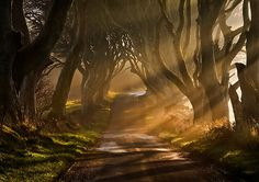 The Dark Hedges, Antrim, Ireland ... photo by GaryMcParland