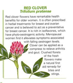 Red clover is benefi