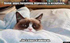 The five stages of waking up....so true!