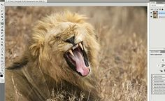 How to Photoshop a Picture – PictureCorrect