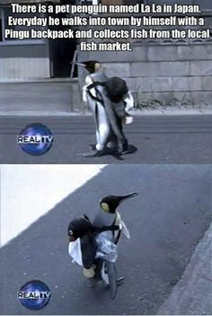 Funniest Memes - [There Is A Pet Penguin...]
