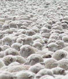 quit raising good little sheep. http://www.youtube.com/watch?v=d2NsqnNgVX4 Counting sheep never seemed so daunting.