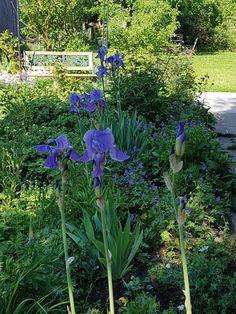 Garten in lila und blau.