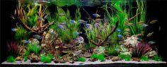 Deko für Aquarium selber machen – 30 kreative Ideen