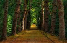 caminhos dos Açores