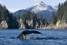 Kenai Fjords National Park. Alaska