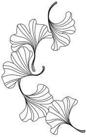 Image result for ginkgo line art