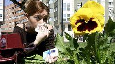Diez consejos para aliviar los efectos de las alergias     Identificar la causa, reducir las actividades al aire libre y lavarse con frecuencia es fundamental para reducir las consecuencias, según los expertos