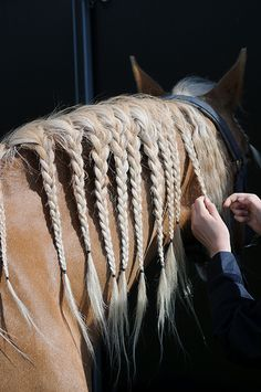 braiding this long mane to keep it neat at the barn  ~photo by Steven Lilley