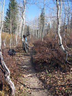 Mountain biking Cres