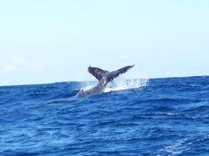 Walvissen spotten bij St. Lucia in Zuid-Afrika