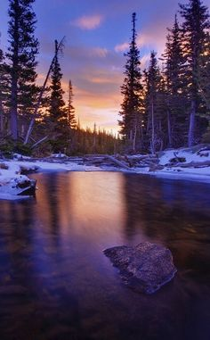 Sunrise on a Forrest.