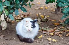 Pamuk - A little ball of fur in Istanbul