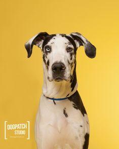 Photo Gallery: Pet Portraits on Bright Seamless Paper | Savage Universal Blog