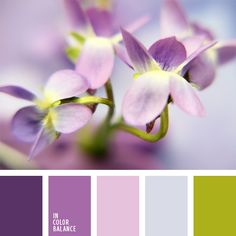 color palette №885 delicate light green color , shades of purple, pastel shades of purple, pink and purple, lilac, color pansies, lilac color / cvetovaya-palitra-885