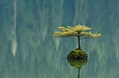 Incredible Photos of Lonely Trees