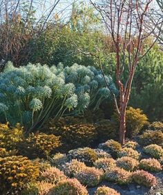 Harlow Carr: a amazing wintertime backyard garden wander
