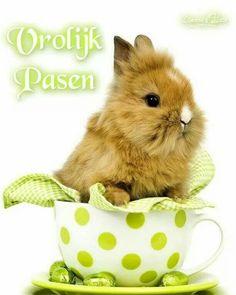 Happy Easter Sunday to you all! Baby Bunnies, Cute Bunny, Adorable Bunnies, Lionhead Bunnies, Hunny Bunny, Happy Easter Sunday, Cute Funny Pics, Funny Animals, Cute Animals