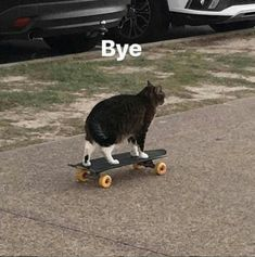 Funny Reaction Pictures, Funny Animal Pictures, Cute Funny Animals, Cute Cats, Funny Cats, Cats Humor, Cute Memes, Funny Memes, Memes Humor