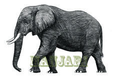 Ink drawing of African elephant