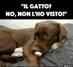 Il gatto?.. | BESTI.it - immagini divertenti, foto, barzellette, video Cute Funny Animals, Funny Animal Pictures, Funny Images, Funny Dogs, Cute Cats, Persian Kittens, Animal Memes, Videos Funny, Cat Memes