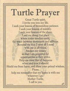 Turtle Prayer