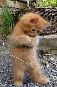 Cute ginger kitten ♥️