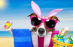 author: grimarika / size: 5580x3139 / tags: dog, glasses, butterfly, bunny ears, Easter, beach, funny, beach, happy, vacation, dog, eggs, sunglasses