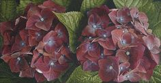 Mia Tarney | Plum Hydrangea