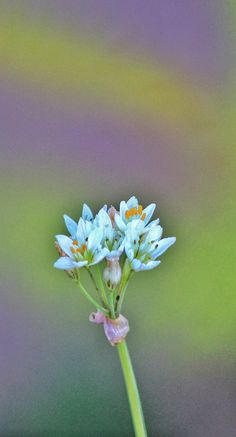 wild flower - wild flower - Khalid Touimi photo