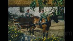 The Quiet Man as you've never seen it: Blu-ray The Quiet Man, John Ford, Irish, Horses, Tv, Books, Animals, Libros, Animales