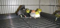 Customs: 93 exotic birds, 50 living, found in man's luggage in Los Angeles