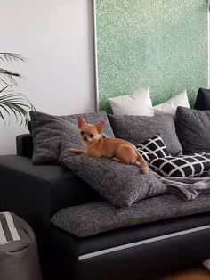 Finnley von Blue Ice Chihuahua, Lounge, Ice, Couch, Blanket, Furniture, Home Decor, Chair, Airport Lounge