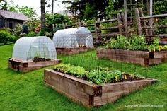 Starting A Vegetable Garden In North Texas How To Grow Vegetables All Year Long Even In Winter Seasonal
