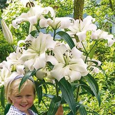 Giant Hybrid Lily Pretty Woman. Pretty Woman is an elegant oriental lily with very large, creamy white flowers that are marked with a hint of green in the center. The blooms will reach up to 6-8' during three years of flowering. Fragrant.