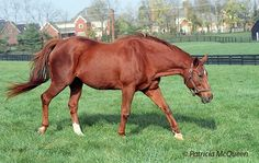 Terlingua. Children of Secretariat: the flying filly responsible for Storm Cat | Topics: Secretariat, Terlingua, Storm Cat, Overbrook Farm, D. Wayne Lukas | Thoroughbred Racing Commentary