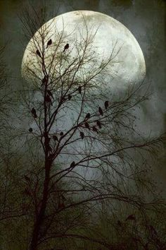 Black birds singing in the dead of night by John Rivera-such a beautiful moon Beautiful Moon, Beautiful World, Beautiful Collage, Shoot The Moon, Moon Pictures, Moon Photos, Moon Photography, Moonlight Photography, Photography Ideas