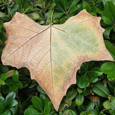 Happy #valentines ! A great #weekend ahead! And this is the #proof ;) #Love for all!  Changing #seasons. Seeing a #rainbow of #colors in one small #leaf.