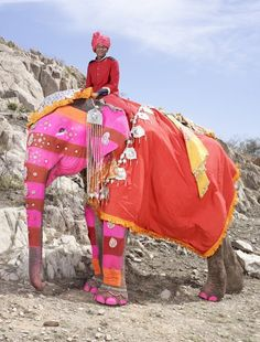 The annual elephant festival in Jaipur,   Rajasthan. Must go and must start painting my pet elephant.