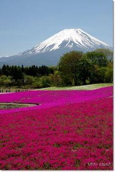 Mt.Fuji Spring ~ Japan