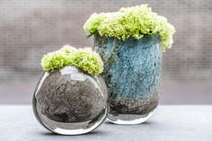Beautiful colors! Small Plants, Green Plants, Green Flowers, Circle Metal Wall Art, Table Flowers, Flower Planters, Flowering Trees, Ikebana, Floral Arrangements